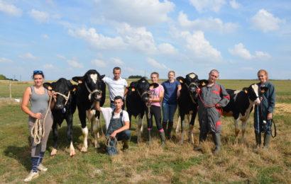 Le concours interdépartemental de la race Prim'Holstein