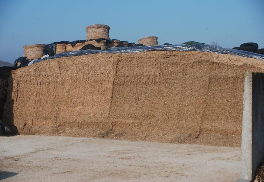 Maïs ensilage 2018, un apport d'énergie nécessaire pour équilibrer les rations