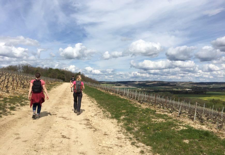 Des randonnées pour échanger avec le monde agricole
