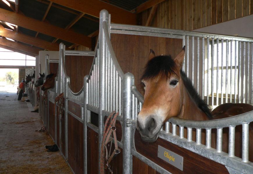 Grippe équine : 10 foyers comptabilisés dans l'Hexagone