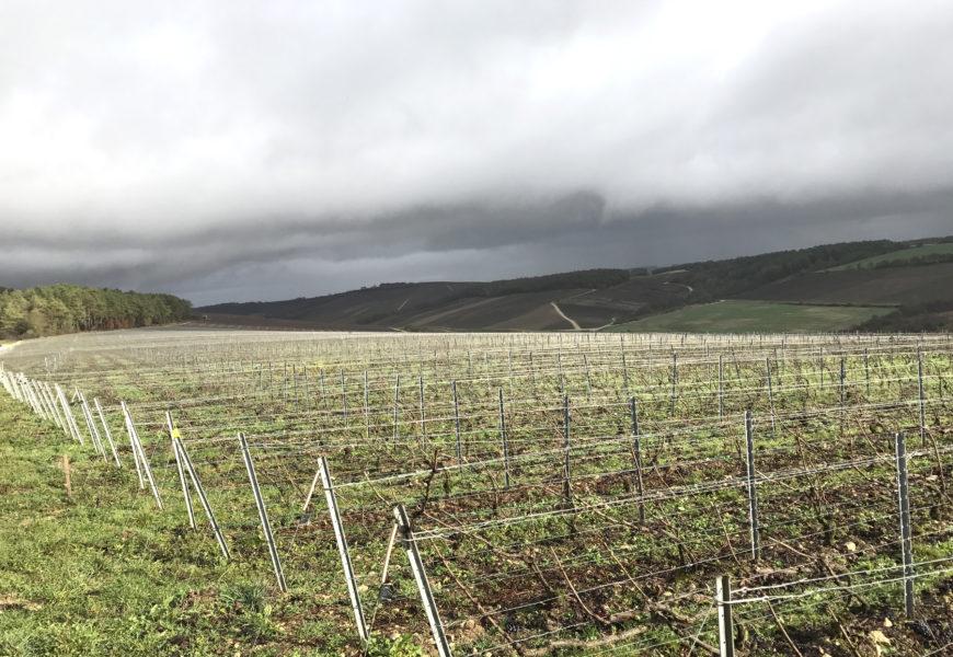 La taille de la vigne : une activité à risque ?