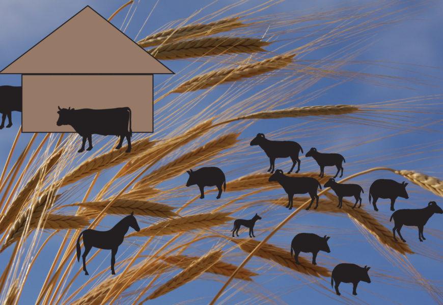 Quelle histoire ! Six mille ans d'agriculture dans la plaine de Troyes