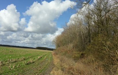 Filière forêt-bois : Forinvest crée une société d'investissement