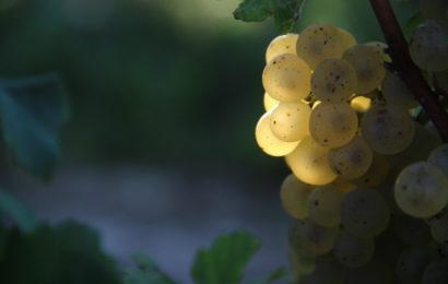 La 23ème foire aux vins d'Essoyes, c'est ce week-end