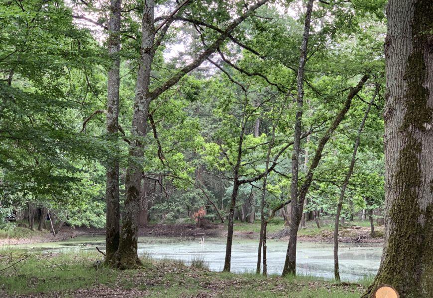Grand Est : une étude concernant les mares forestières