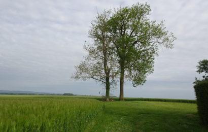 La santé des forêts de l'Aube