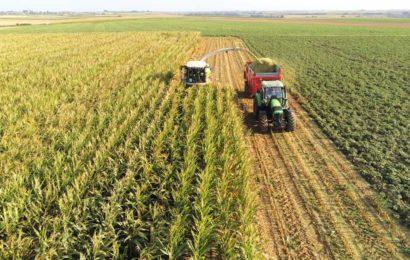 Maïs ensilage : des rencontres pour estimer la date de récolte