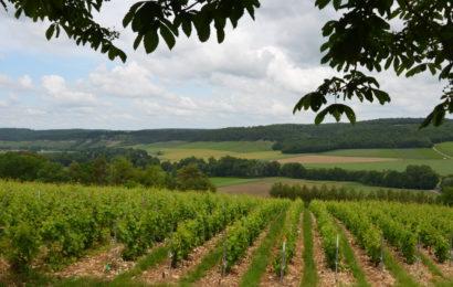Rebâtir la souveraineté alimentaire française, la priorité