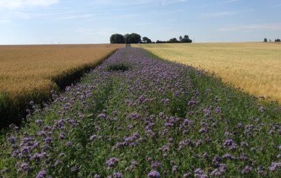 Couverts végétaux et développement de la biodiversité