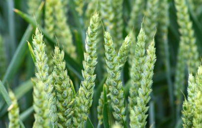 « Le Gouvernement doit changer de politique agricole »