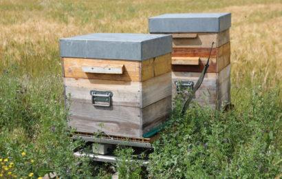 Même les abeilles sont à l'ère du numérique!