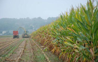 Ensilage de maïs : le succès des rendez-vous analyses