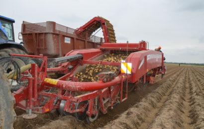 Pommes de terre : diminuez vos surfaces