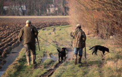 La chasse serait autorisée et très encadrée