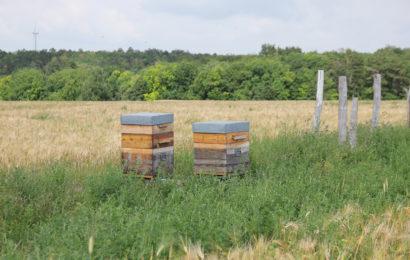 Une filière pour les abeilles et la biodiversité