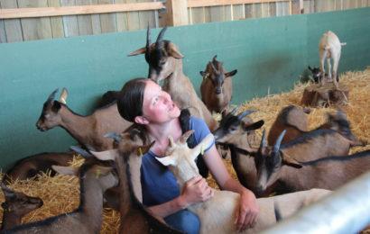 Les chèvres de Manon Vérité